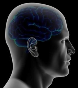 cerveau bleu