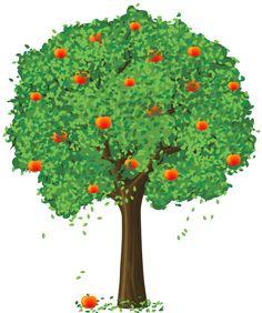 pomme arbre