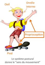 Proprioception skate