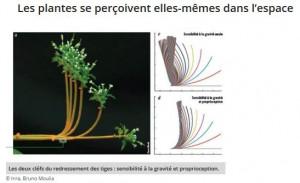 plantes dans l'espace