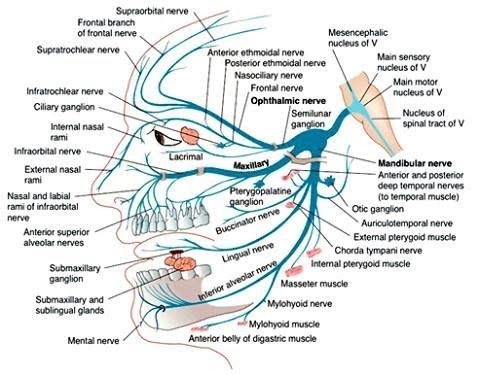 plasticité cérébrale céline alvarez