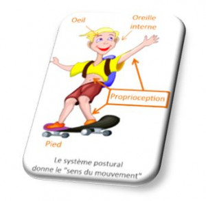 proprioception mouvement