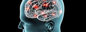 cerveau et neurones