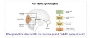 cerveau apprend à lire